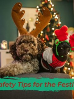 Top Pet Safety Tips for the Festive Season - I Love Veterinary