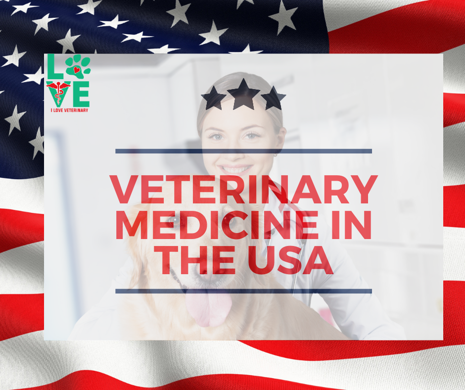 Veterinary Medicine in the USA I Love Veterinary - Blog for Veterinarians, Vet Techs, Students