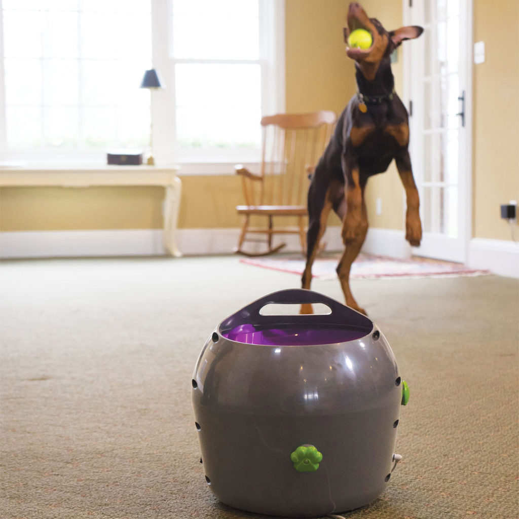 Automatic Ball Launcher, Top 5 Customer Rated Pet Tech Products from Petsafe - I Love Veterinary