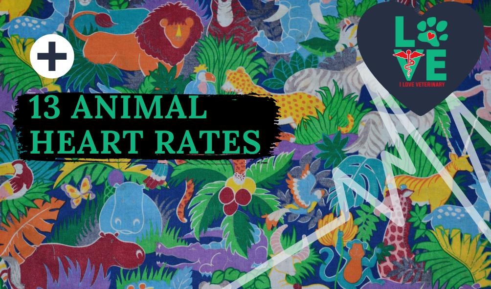 13 animal heart rates