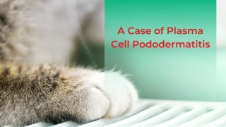 A Case of Plasma Cell Pododermatitis - I Love Veterinary