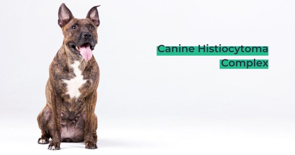 Canine Histiocytoma Complex - I Love Veterinary