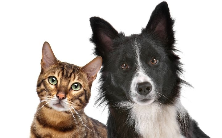 Cat and dog, The‌ ‌Top‌ ‌10‌ ‌Low‌ ‌Maintenance‌ ‌Pets‌ ‌to‌ ‌Own‌ ‌- I Love Veterinary