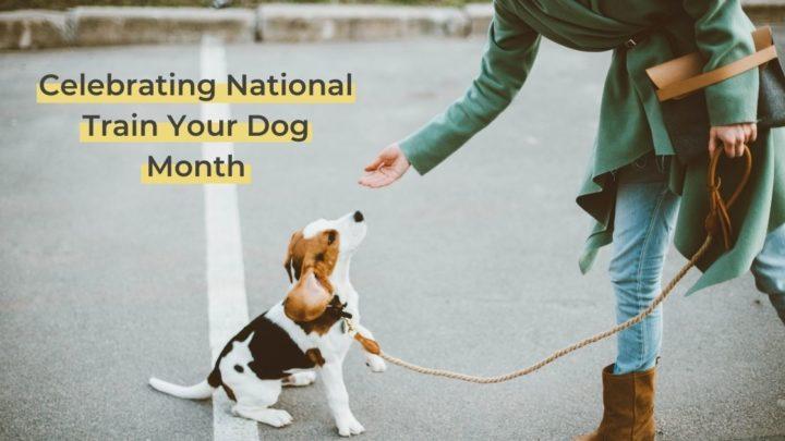 Woman giving treat do beagle dog on the street - I Love Veterinary
