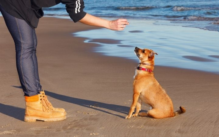 Woman training dog on the beach offering him a treat - I Love Veterinary