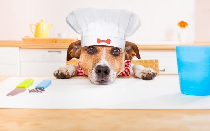 Dog with Chef hat in kitchen ready to cook some homemade dog food - I Love Veterinary