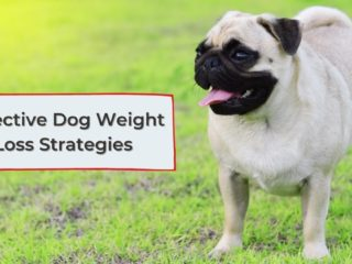 Effective Dog Weight Loss Strategies - I Love Veterinary