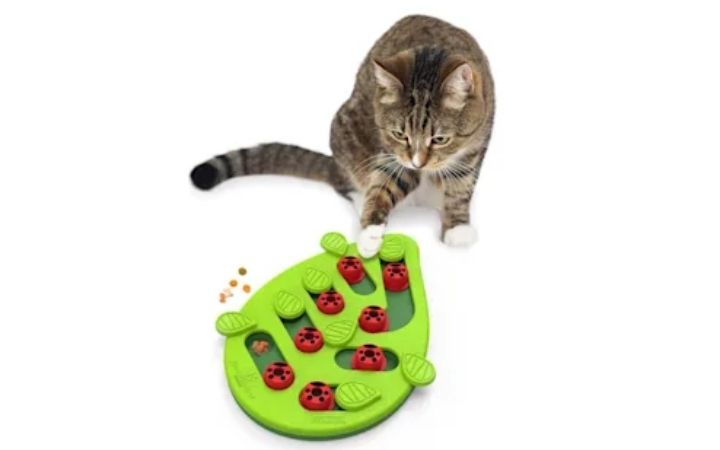 Petstages Green Buggin Out Puzzle & Play Interactive Cat Treat Toy, Petco's Top Rated Pet Toys - I Love Veterinary
