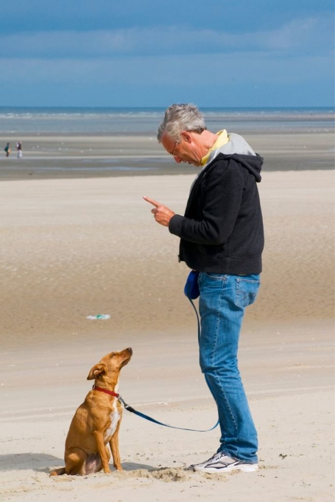 Man training dog on the beach, pointing index finger up - I Love Veterinary