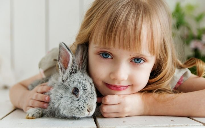 Rabbit, The‌ ‌Top‌ ‌10‌ ‌Low‌ ‌Maintenance‌ ‌Pets‌ ‌to‌ ‌Own‌ ‌- I Love Veterinary