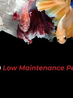 The Top 10 Low Maintenance Pets to Own - I Love Veterinary