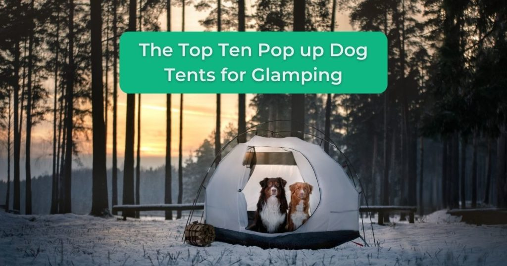The Top Ten Pop up Dog Tents for Glamping - I Love Veterinary