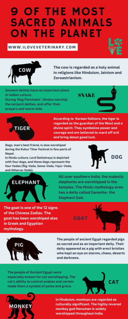 9 of the most sacred animals on the planet