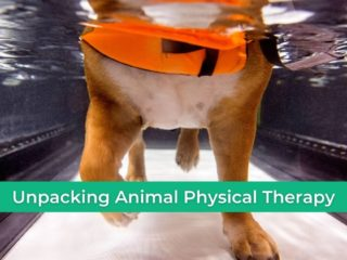 Unpacking Animal Physical Therapy - I Love Veterinary