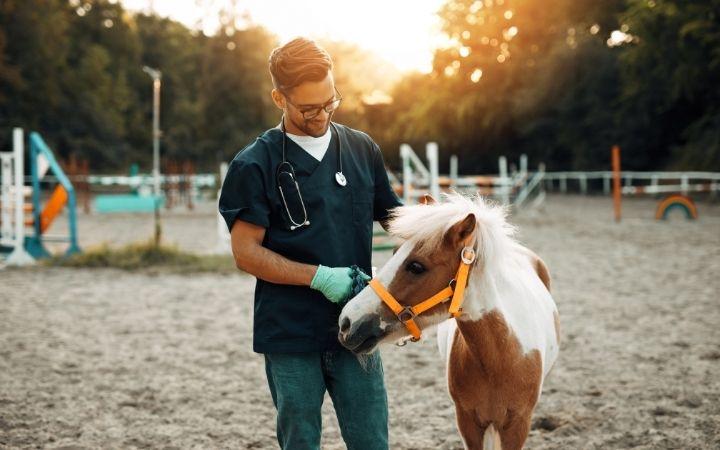 Veterinarian with pony horse - I Love Veterinary