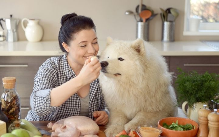 Woman cooking in the kitchen with dog - I Love Veterinary