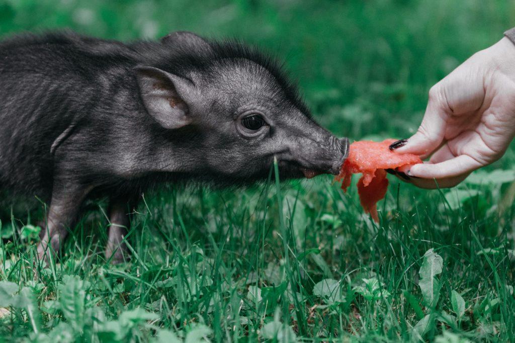 pexels alexandra novitskaya 3178268 I Love Veterinary - Blog for Veterinarians, Vet Techs, Students