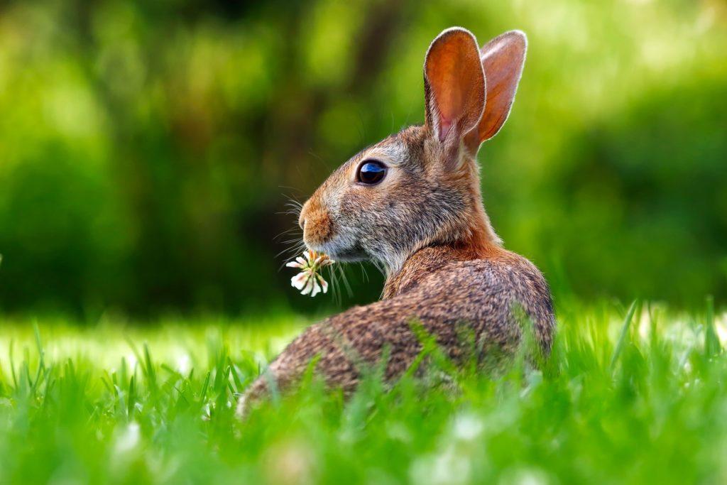 pexels pixabay 255387 I Love Veterinary - Blog for Veterinarians, Vet Techs, Students