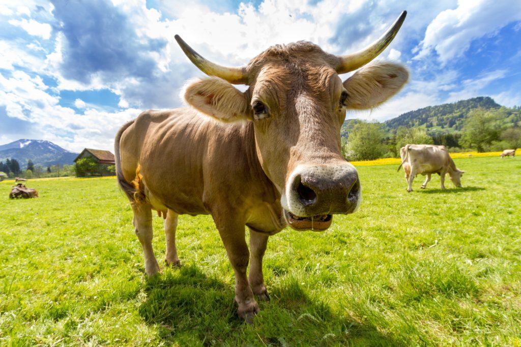 pexels pixabay 36347 I Love Veterinary - Blog for Veterinarians, Vet Techs, Students