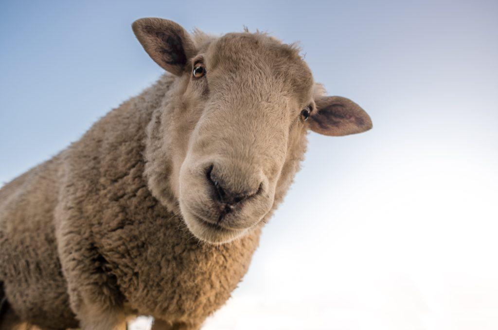 pexels skitterphoto 227691 I Love Veterinary - Blog for Veterinarians, Vet Techs, Students