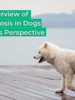 An Overview of Blastomycosis in Dogs From a Vet's Perspective - I Love Veterinary