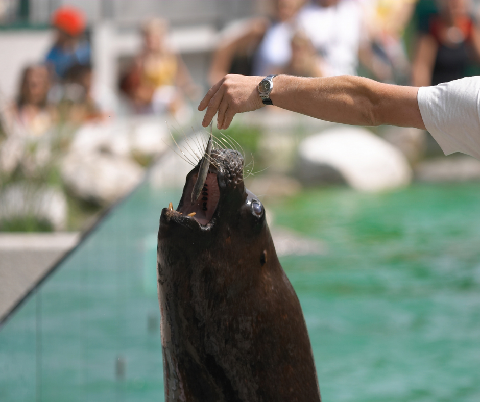 vet feed a seal a fish