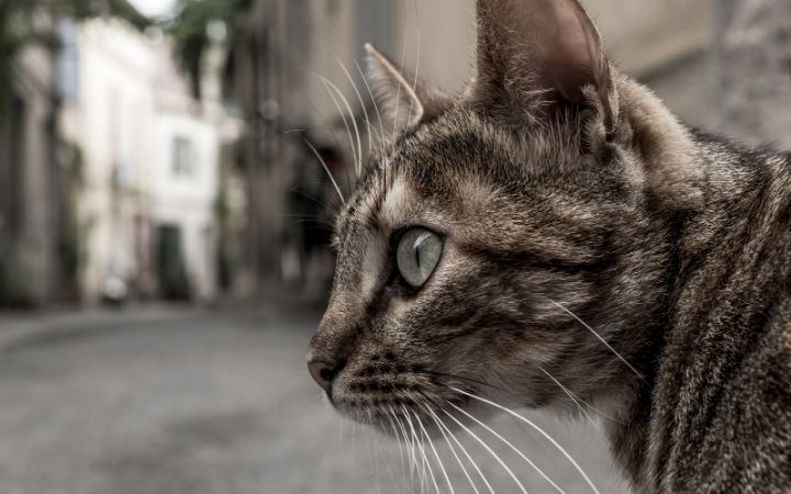 Closeup of the cat's head with a street behind her - I Love Veterinary