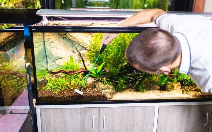 Man cleaning the aquarium - I Love Veterianry