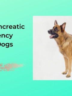 Exocrine Pancreatic Insufficiency (EPI) in Dogs - I Love Veterinary