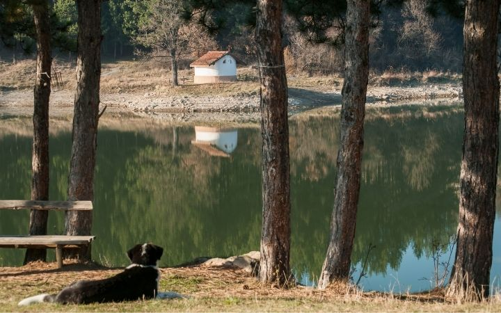 Wood landscape with lake and dog laying by the lake water - I Love Veterinary