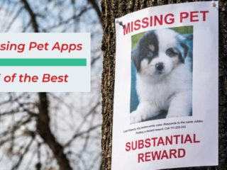 Missing Pet Apps 5 of the Best - I Love Veterinary