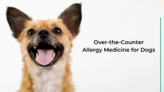 Over-the-Counter Allergy Medicine for Dogs - I Love Veterinary