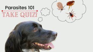 Parasitology quiz by I Love Veterianry