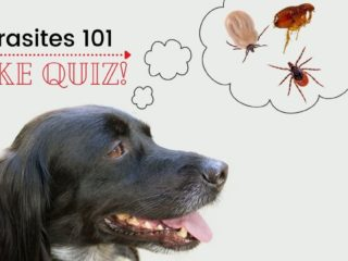 Parasitology quiz by I Love Veterianry