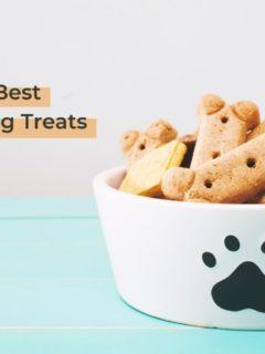 The 12 Best Dog Training Treats - I Love Veterinary