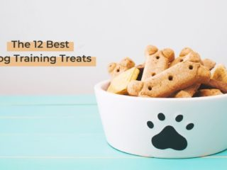 The 12 Best Dog Training Treats - I Love Veterinary