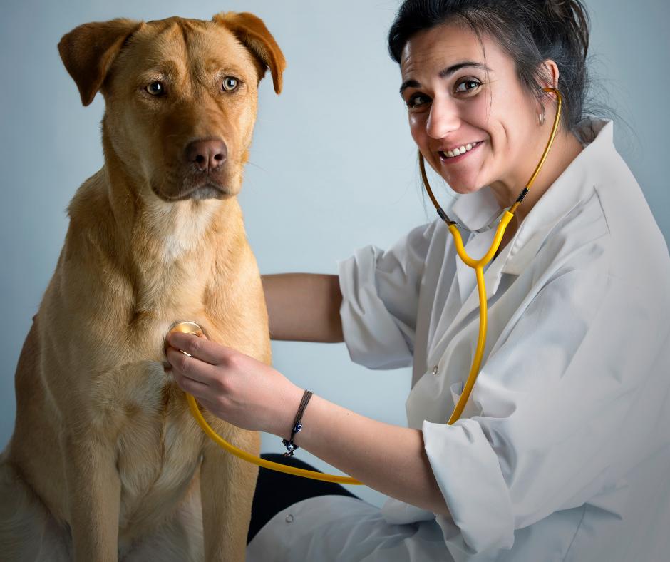 female vet examining dog with stethoscope