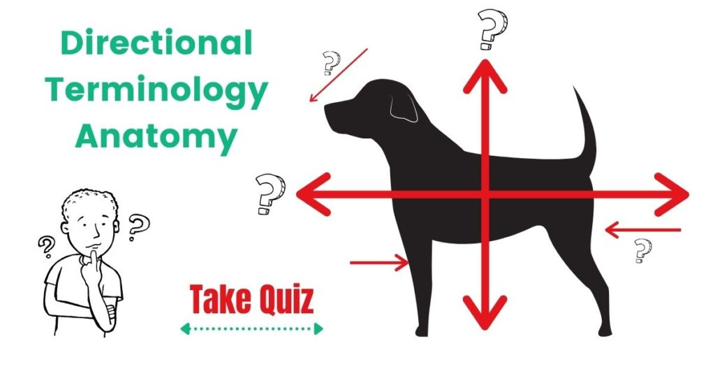 Quiz: Directional Terminology – Anatomy by I Love Veterinary
