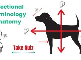 Quiz: Directional Terminology – Anatomy by I Love Veterinary
