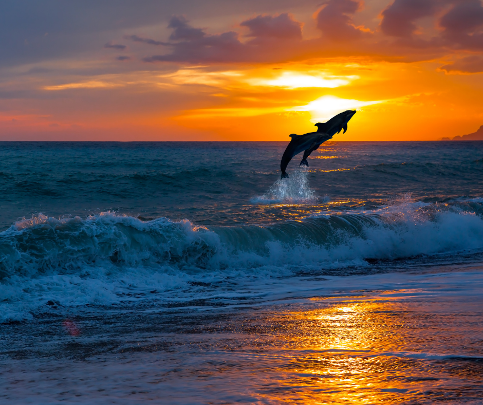 two dolphins jumping in the sunset close to the beach