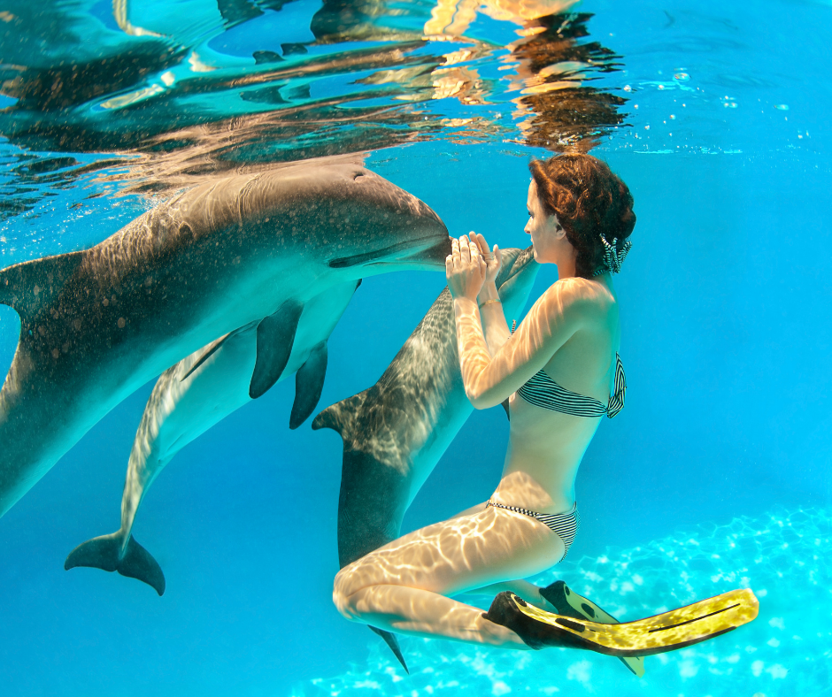 Girl free-diving with a pod of dolphins