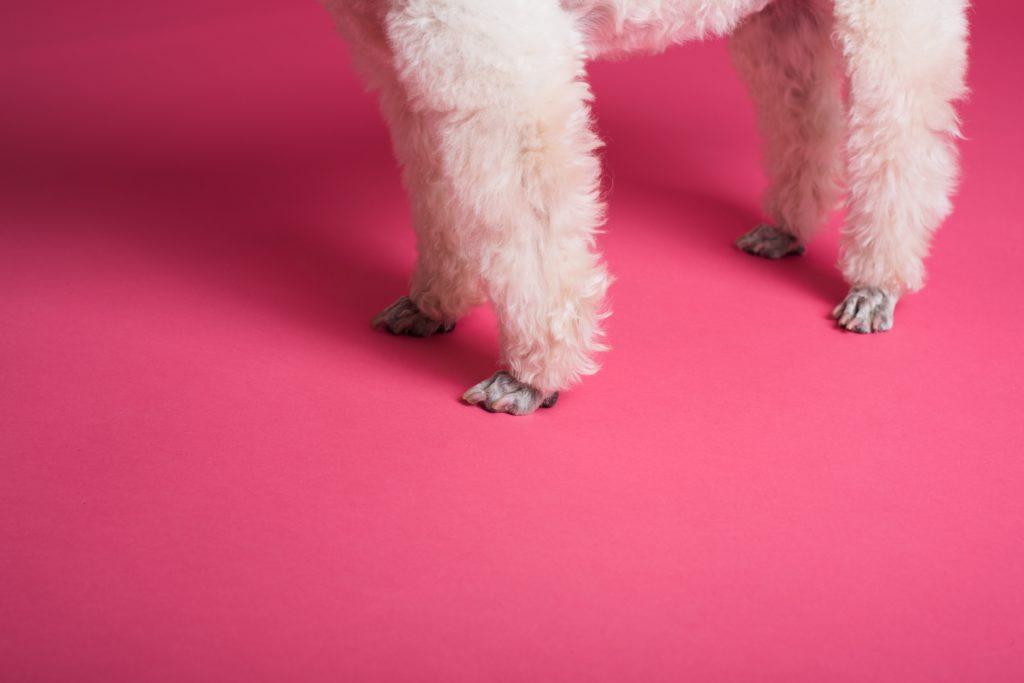 pexels goochie poochie grooming 3299907 I Love Veterinary - Blog for Veterinarians, Vet Techs, Students