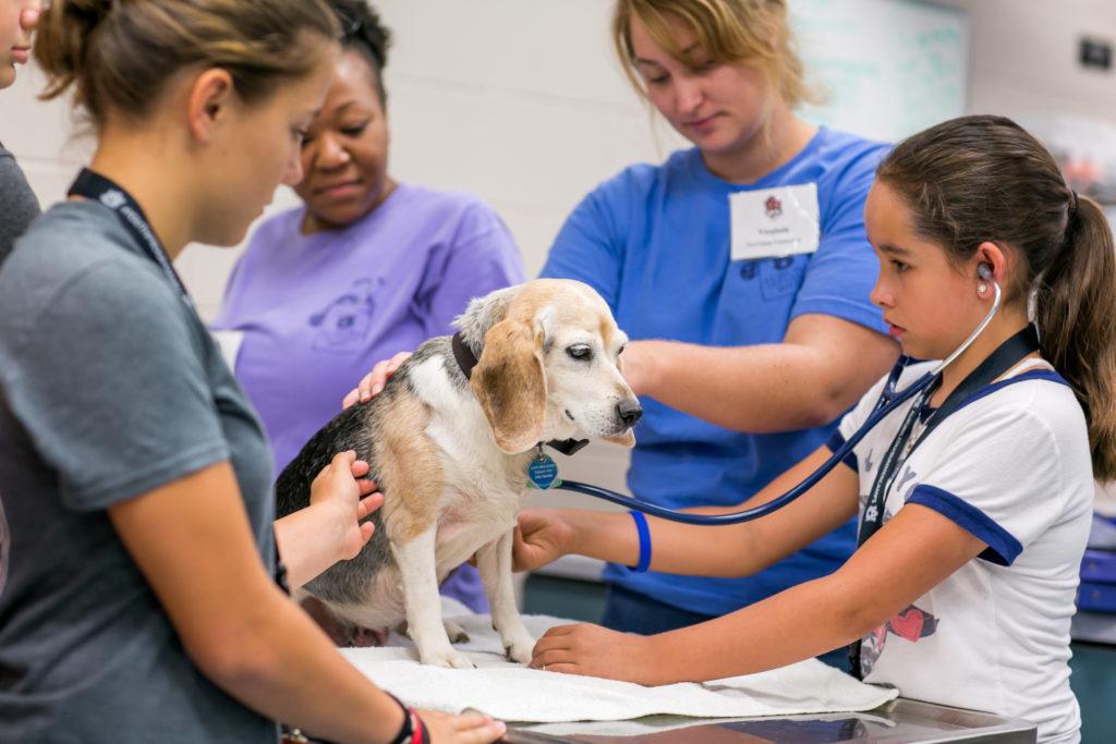 """Become a Veterinarian Camp"" kids examining old beagle - I Love Veterinary"