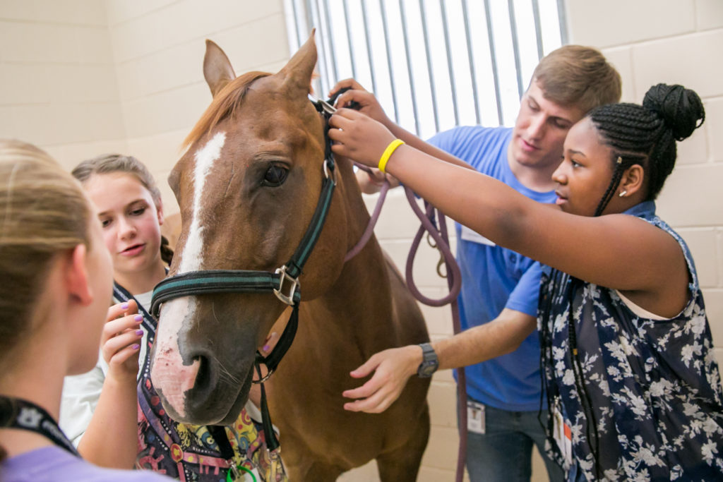 """""""Become a veterinarian camp"""", vet with horse and kids visiting camp - I Love Veterinary"""