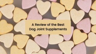 A Review of the Best Dog Joint Supplements - I Love Veteirnary