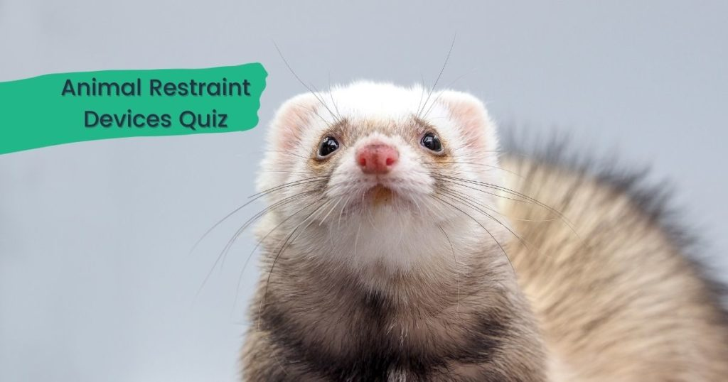 Animal Restraint Devices Quiz - I Love Veterinary