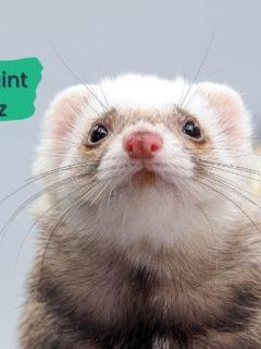 Animal Restraint Devices Quiz - I Love Veterinary