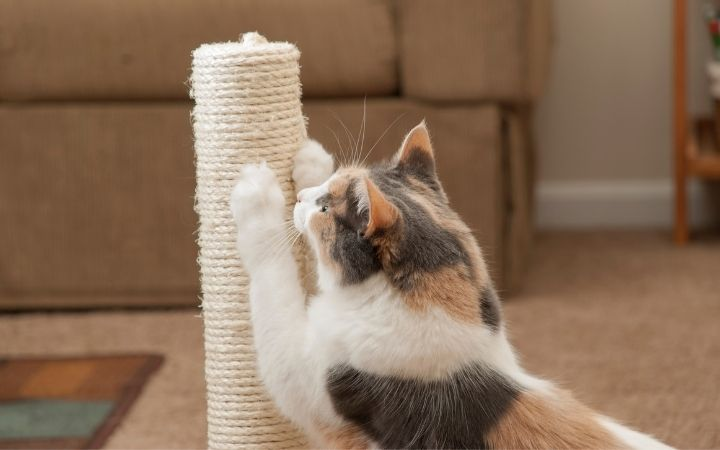Cat scratching - I Love Veterinary