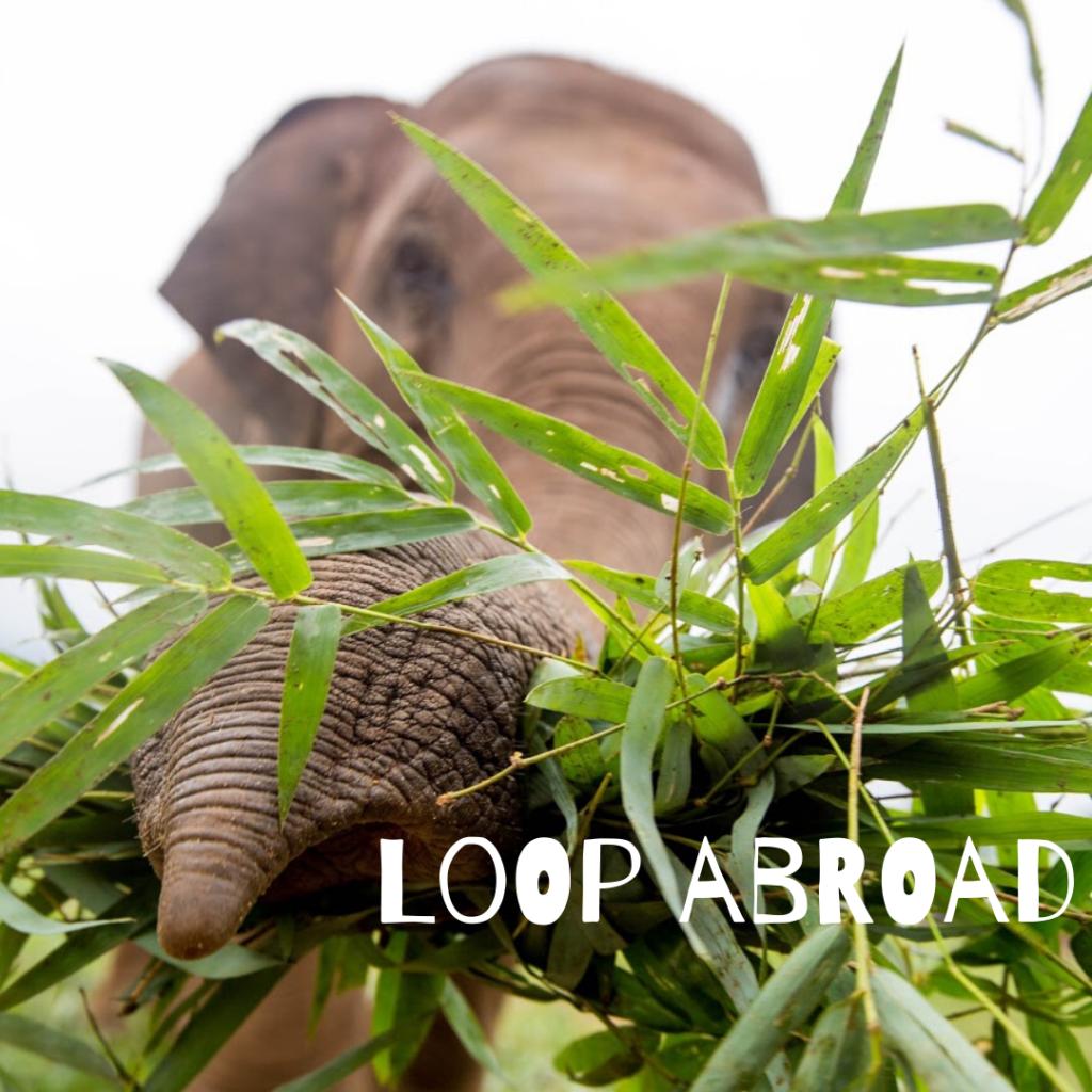 loop abroad veterinary programs