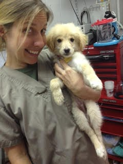 Natasha Feduik with puppy - I Love Veterinary